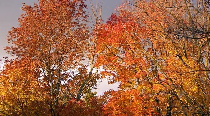 Autumn green home inspirations