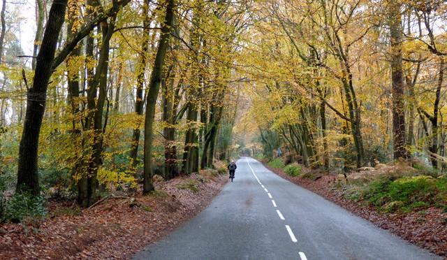 Autumn adventures on the way